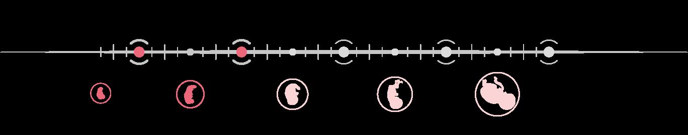 Πρώτο Τρίμηνο Εγκυμοσύνης - Τι πρέπει να Γνωρίζετε - GynoCare Center