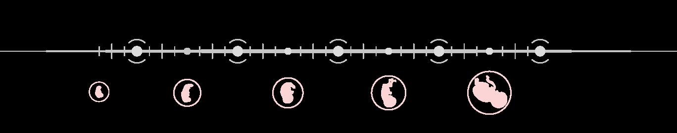 Παρακολούθηση και Τρίμηνα Εγκυμοσύνης - GynoCare Center
