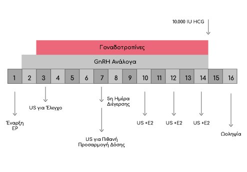 Βραχύ Πρωτόκολλο με Ανάλογα (GnRH) - GynoCare Center